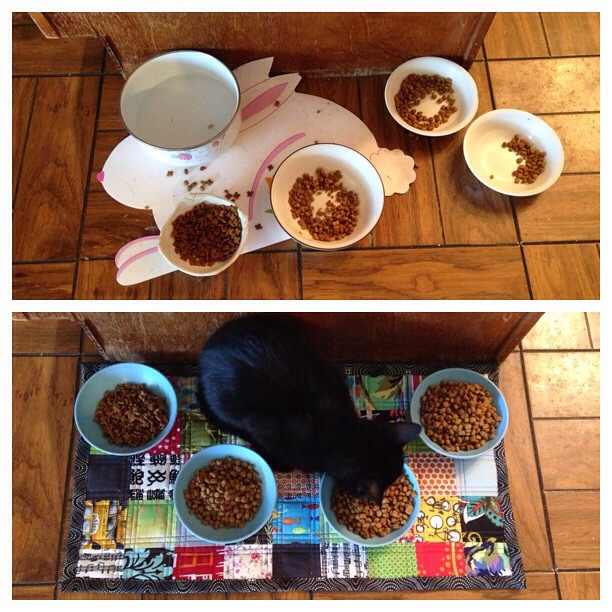 Cat Bowls Before and After