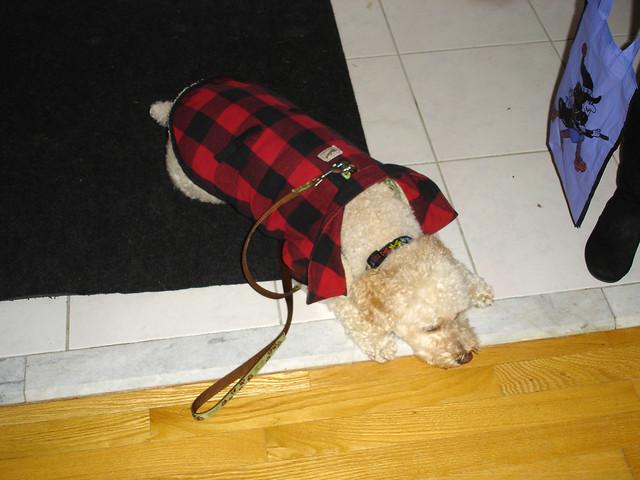 halloween dog lumberjack costume