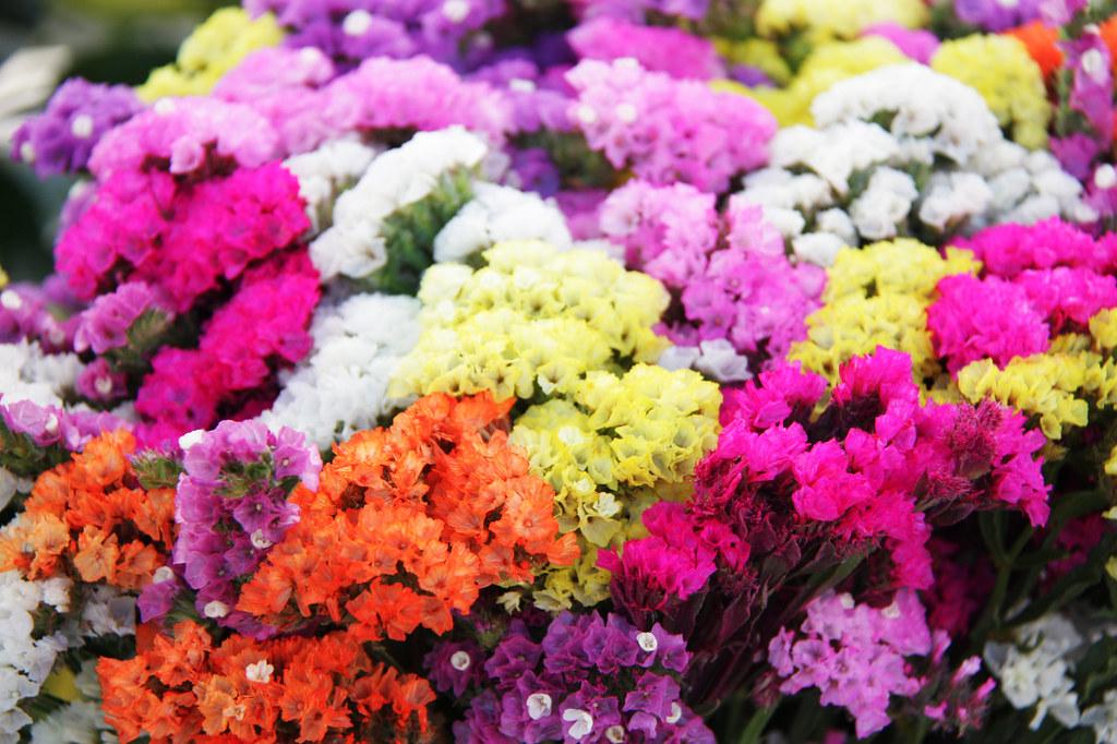 Imagen gratis de flores de colores