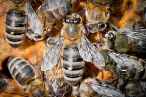 BEES107