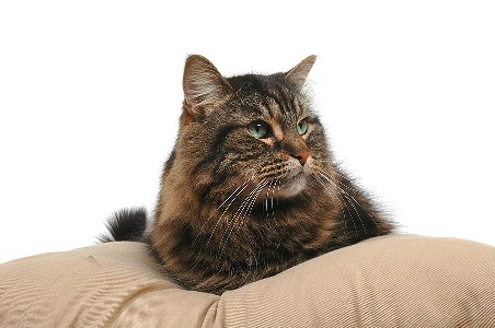 veterinaire de garde geneve we take good care of your pets. Black Bedroom Furniture Sets. Home Design Ideas