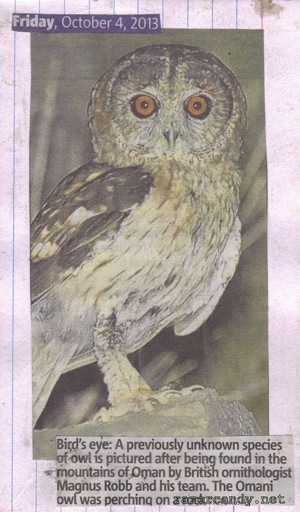 04-10-2013 Omani Owl Back