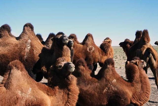 Gobi desert (17)