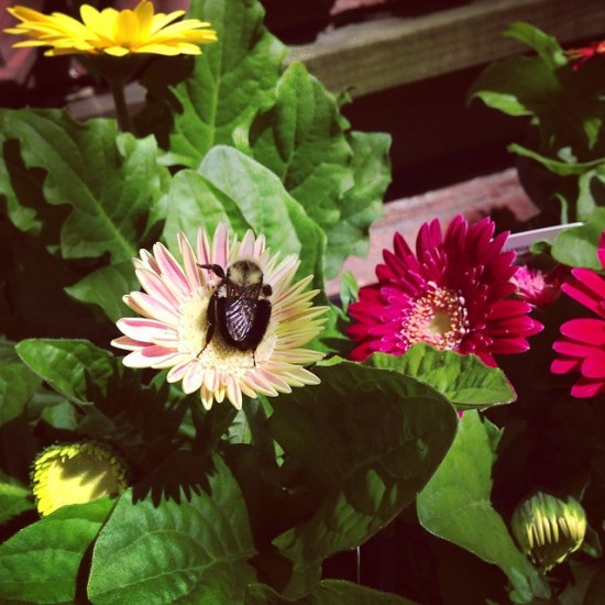 busy beeing by anitam_com