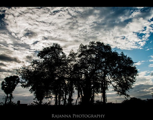 Banyan Tree - ஆலமரம் by Rajanna @ Rajanna Photography