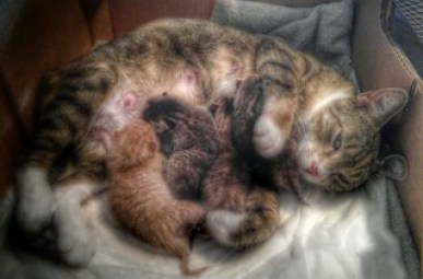 Mama loves her new born babies