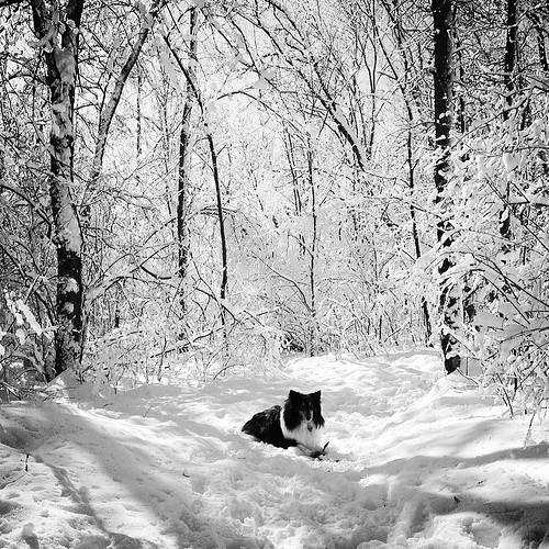 Jasper in black and white