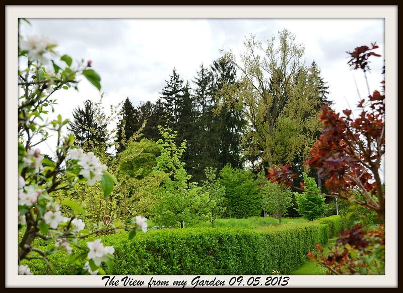 Landscape - from my garden - WordPress