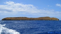 Leaving Molokini May 12th ❤