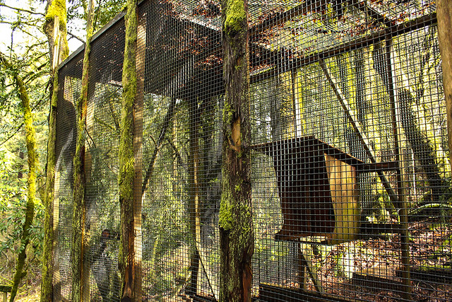 Raven enclosure at the Audubon Society of Portland