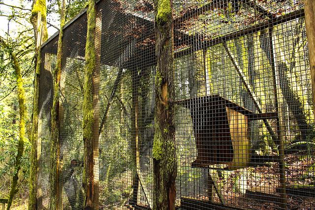 Raven enclosure at the Audubon Society of Portland