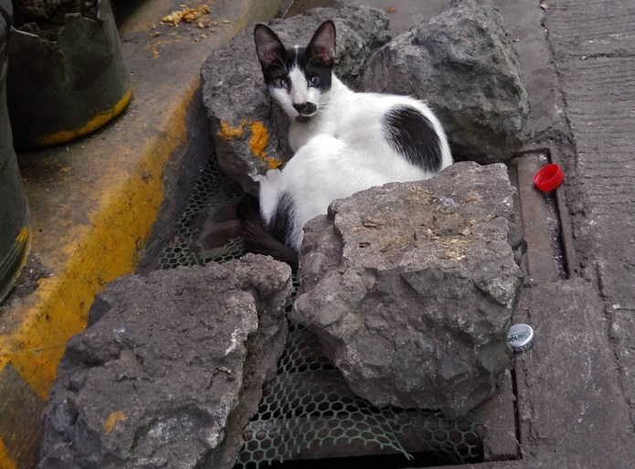 stray cat nestled between rocks 3