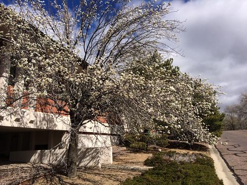 Winter Blooming Tree by dagnyg