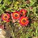 Postberg Flower Trail Sept 2013_0073