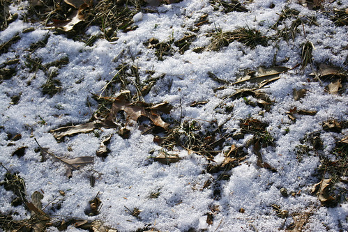 snow encrusted ground