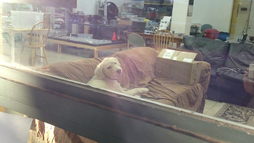 Sam the Dog
