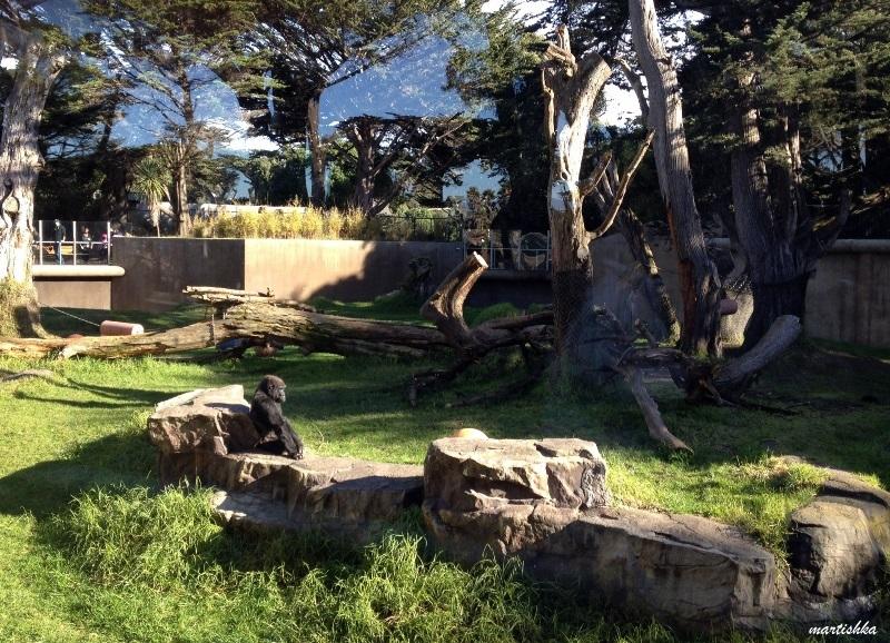 San Francisco Zoo (9)