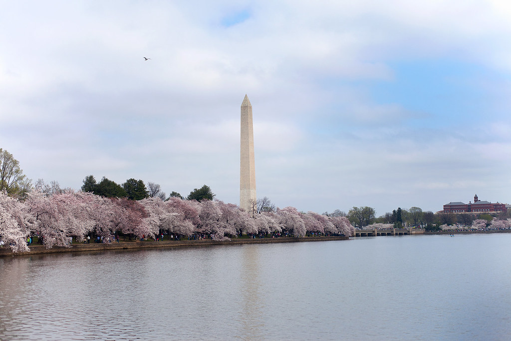 Washington Monument, Cherry Blossom Festival.