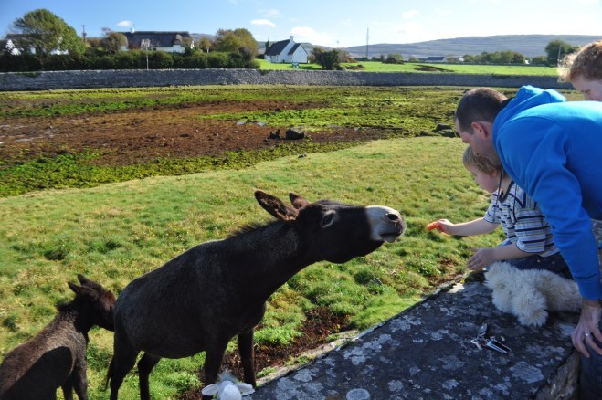Visiting Donkeys in Ballyvaughan with Day Tours World and Paddywagon Tours