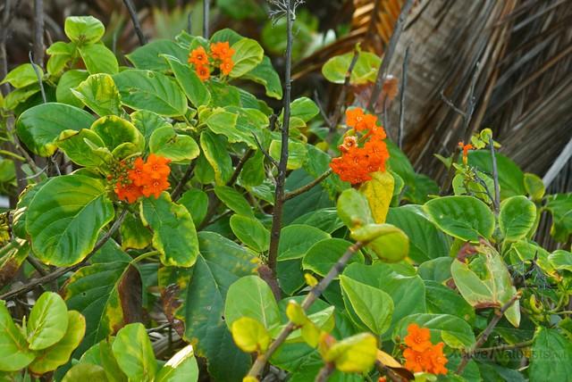 naturist 0012 Sian Kaan beach, Quintana Roo, Mexico