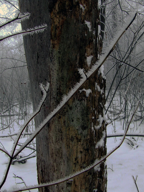 dead tree in the ice fog