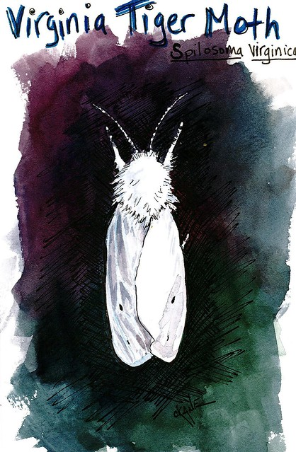 20130731_moth2
