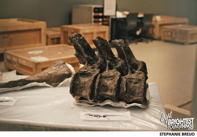 Smithsonian Dinosaur Exhibit Photos Brightest Young Things Stephanie Breijo1