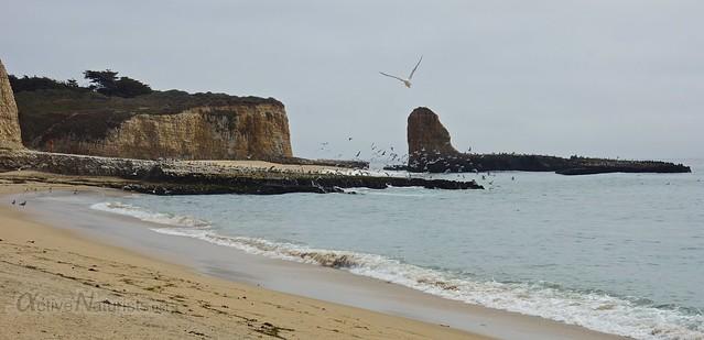 naturist 0001 4 Mile Beach, CA, USA