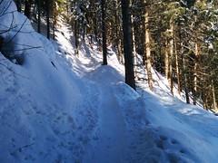 Aufstieg Gornerberg durch den Wald