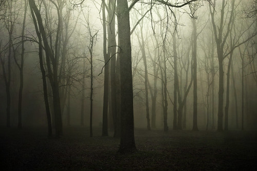 Can't See the Forest for the Trees by jumpinjimmyjava