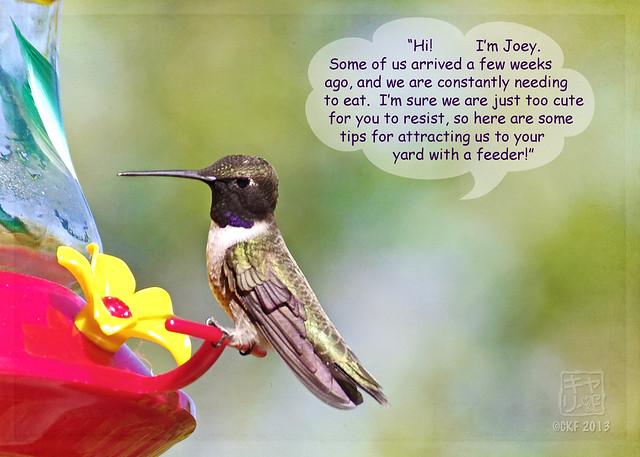 Hummingbird Dialogue 1