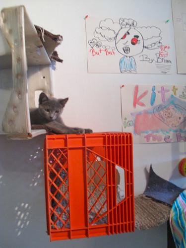 Kitty City opening-53