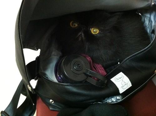 Ella in my purse