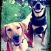 Zooey and Roxy