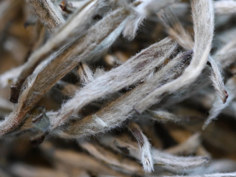Fujian Silver Needle