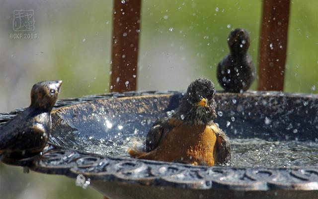 Robins Bath 10