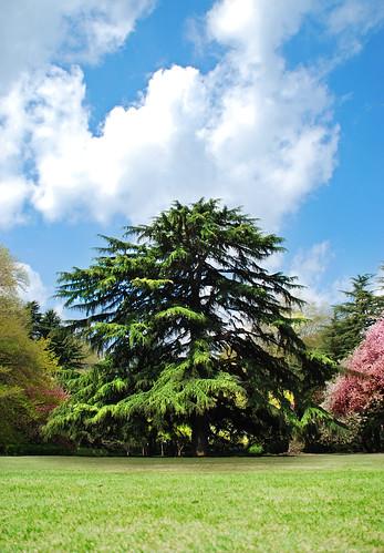 Grand Japanese Fern Tree, by Pixelglo Photography