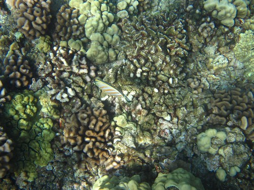 maui_coral_reef