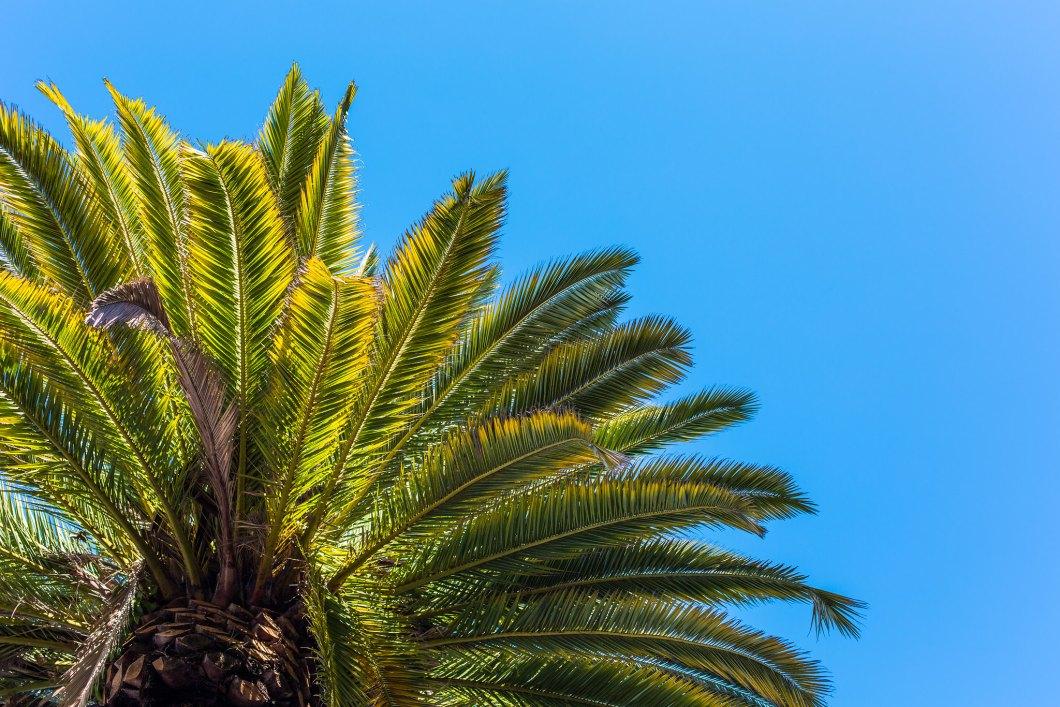 Imagen gratis de una palmera con el cielo de fondo