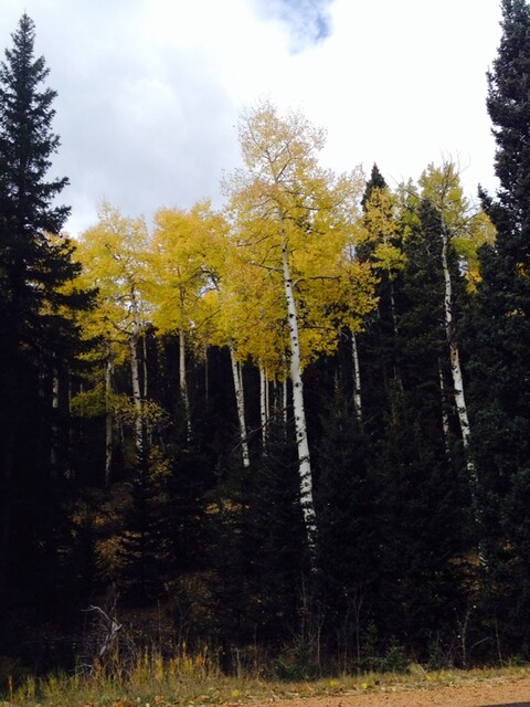 Picture from Mueller State Park, Colorado