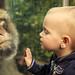 Enough vs. Wow, monkey!