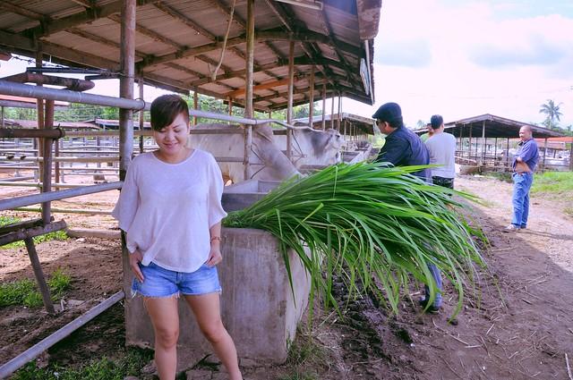 Farm Feel