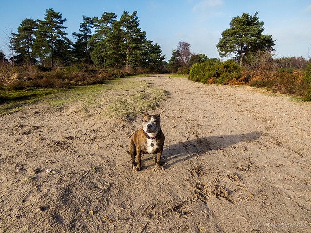 Jez on Upton Heath