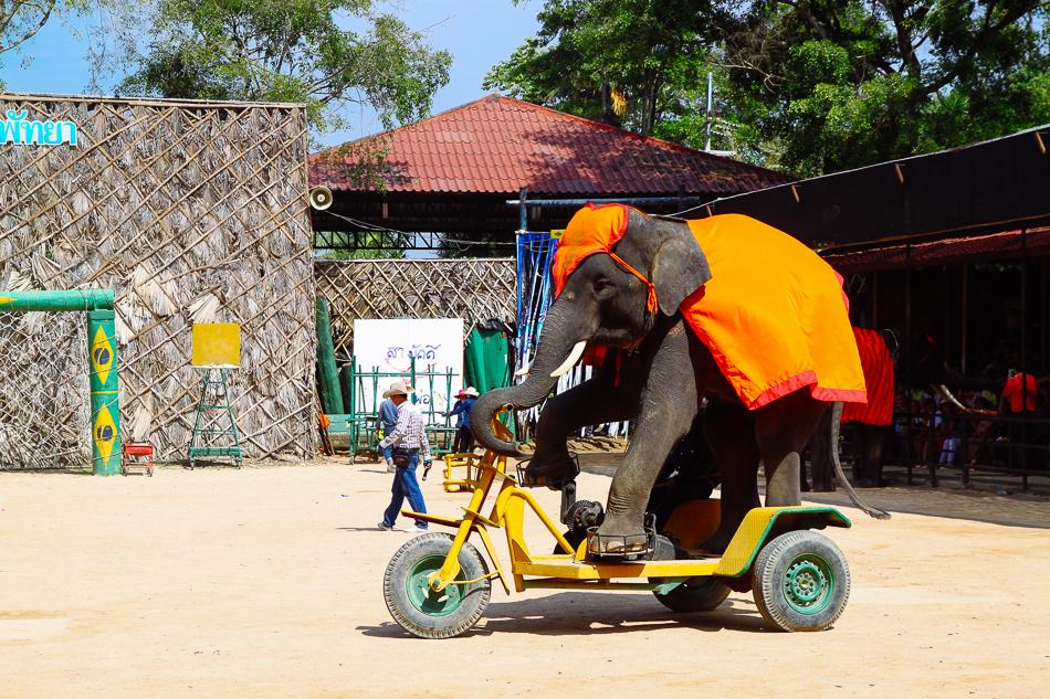 Elephant Show, Nong Nooch Tropical Garden, Pattaya