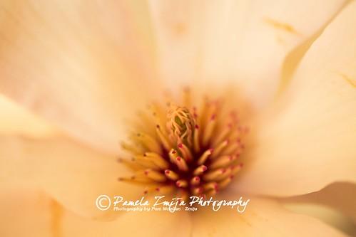 20130505-328C0136-WM by {Pamela Zmija Photography}