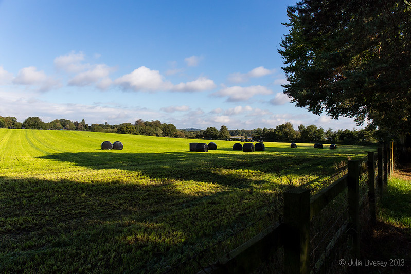 Bales in the sun