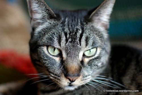 Nico is handsome!