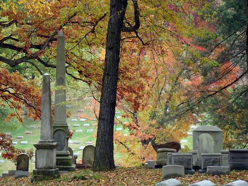 Cemetery Deer - Oct. 31st 2013