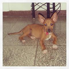 perro sin raza en Cuba