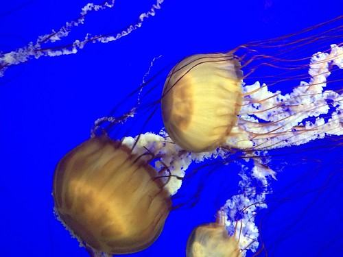 Jellyfish at the Oregon Coast Aquarium!
